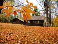 Oak and Maple Leaves on the Cabin Lawn